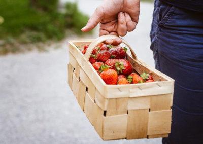 Erdbeeren vom Spargelhof im Kisterl
